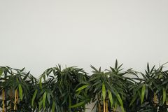 The green plants on a light background stock image