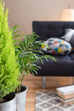 Green plants in the living room Stock Photos