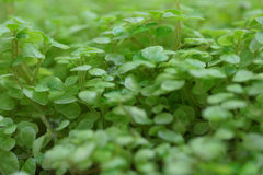 Green plants. Medium shot Royalty Free Stock Photography
