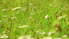 Green Plants in Nature Field stock video