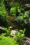 Green plants near creek Royalty Free Stock Photo