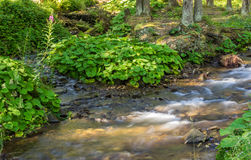 Green plants near sream in the forest Royalty Free Stock Photo