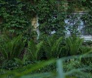 Green plants old house window outdoor village summer. Green plants old house window outdoor garden village summer wood wall stock photo