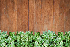 Green plants with old wooden wall background Stock Images