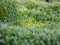Green plants photographed with soft focus. Carpet from grass, coverage of green leaves, eco, background with blur Stock Photography