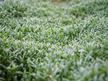 Green plants photographed with soft focus. Carpet from grass, coverage of green leaves, eco, background with blur Stock Photos