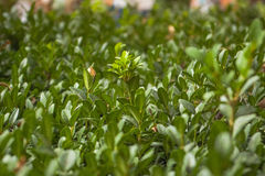 Green plants photographed with soft focus. Carpet from grass, coverage of green leaves, eco, blurred background Stock Photo