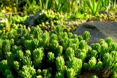 Green plants. Picture was made in botanic garden Royalty Free Stock Images