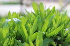 Green plants. Green, plant, growth, health, happiness, sunshine, warm, vitality, spring, love Stock Photos