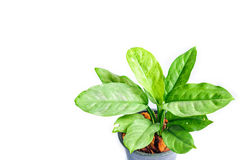 Green plants in plastic pot Royalty Free Stock Image