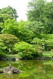 Green plants, pond with reflection in Japanese zen garden Stock Photos