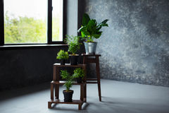 Green plants in pot decorating a room with loft wooden interior and big window. Royalty Free Stock Photos