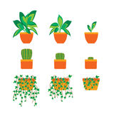 Green Plants in Pot for Home or Office. Vector Royalty Free Stock Photography