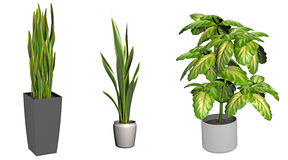 Green plants in pots Royalty Free Stock Image