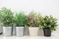 Green plants in pots. On a white table Royalty Free Stock Image