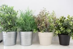 Green plants in pots. On a white table Royalty Free Stock Photography