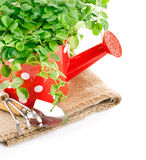 Green plants in red watering can with garden tool Stock Image