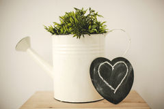 Green plants in retro watering can Stock Images