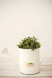 Green plants in retro watering can Royalty Free Stock Image