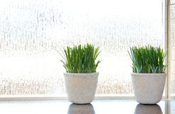 Green Plants in Ripple Glass Window Royalty Free Stock Images