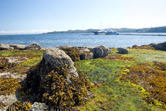 Green plants and rocks. Boat in background Royalty Free Stock Photos