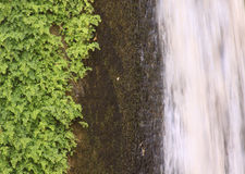 Green plants, rocks and waterfall composition royalty free stock images