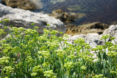 Green plants on a rocky shore Stock Images