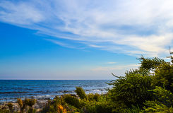 Green plants on the rocky shore of the sea and blue sky with clouds Stock Photos