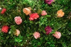 Green plants and rose flowers decorative background wall. stock photo