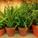 Green plants on rusty background Stock Image