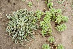 Green plants on sea beach Stock Photos