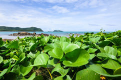Green plants and sea nature landscape Stock Photography