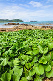Green plants and sea nature landscape Royalty Free Stock Photos