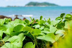 Green plants and sea nature landscape Royalty Free Stock Image