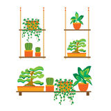 Green Plants Shelves for Home or Office. Vector Royalty Free Stock Photo