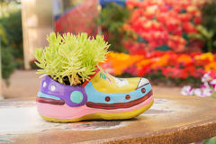 Green plants in shoe-shaped flowerpot Stock Photos