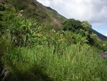 Green Plants on the Side of the Mountain in Iao Valley State Park. Maui Island, Wailuku, Hawaii Stock Images