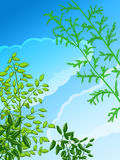 Green plants and sky Stock Image