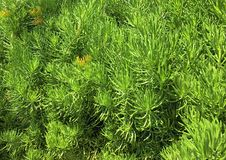 Green plants are soothing to the eyes. Royalty Free Stock Photography