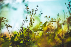 Green plants - stock image. Green plants and nature with sun rising in the back Stock Photo