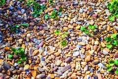 Green plants on stone pebbles. Zen stones and bamboo on the black stock image