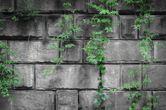 Green plants with stone wall behind Royalty Free Stock Images