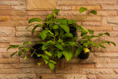 Green plants on a stone wall. Stock Image