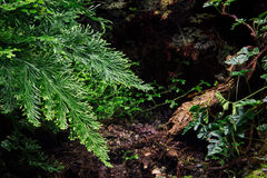 Green plants in summer day. Piece of forest. Green plants in summer royalty free stock photo