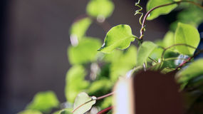 Green plants in sunshine Royalty Free Stock Images