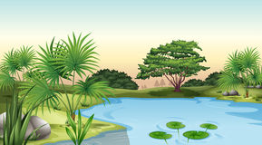 Green plants surrounding the pond. Illustration of the green plants surrounding the pond Royalty Free Stock Image