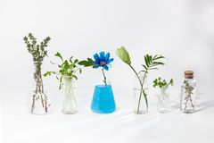 Plants in test tubes royalty free stock image