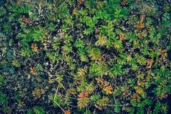 Green Plants Texture Background Stock Photos