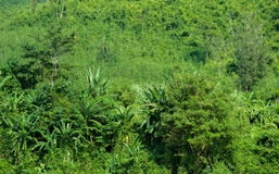Green plants in tropical forest of rural Laos Stock Photo