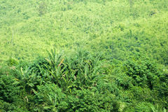Green plants in tropical forest of rural Laos Stock Image